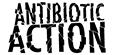 antibiotic action